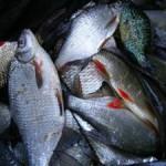 Gyékényesi horgásztó a nagy fogások hazája